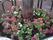 横長:十三日町の花植え