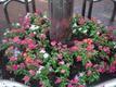 中心街の様子:十三日町の花植え