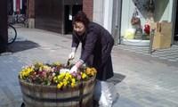 花植え23.4.29-4.jpg