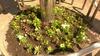 26.4.25-花植え-10.jpgのサムネール画像